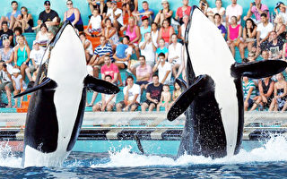 聖地亞哥縣支持海洋公園繼續虎鯨表演