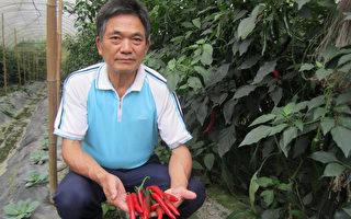 双层网温室  培育出大辣椒
