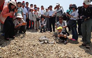 海生馆野放绿蠵龟  顺利回大海