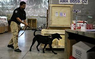狗嗅尿 辨別前列腺癌準確率98%