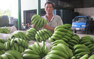 香蕉減產超商熱賣  蕉價高高掛