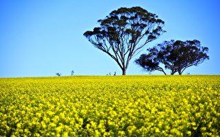 西澳國際首例有機農官司敗訴