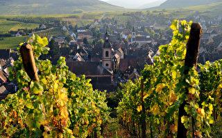 外媒:中共政府公款为法国葡萄园买单