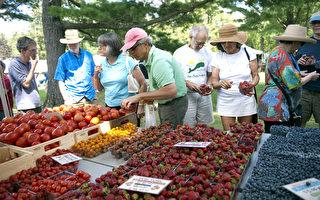 夏日蔬果大賣季 美新州農夫市場崛起