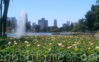 又见莲花节 回声公园内庆亚太裔贡献