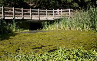 维州知名湖泊被蓝藻污染 专家吁勿戏水