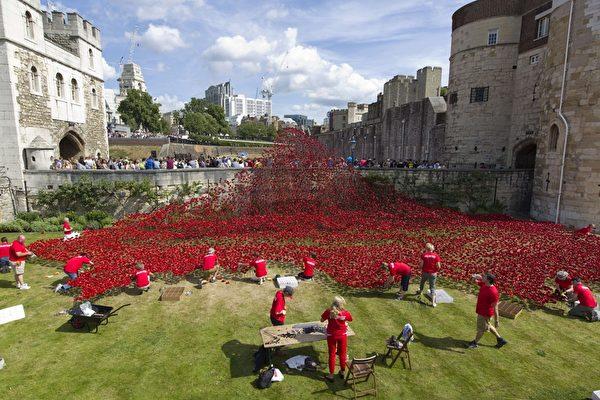 2014年8月3日,在倫敦塔下,志願者們正在擺放88萬8246朵陶瓷做的罌粟花。(JUSTIN TALLIS/AFP/Getty Images)