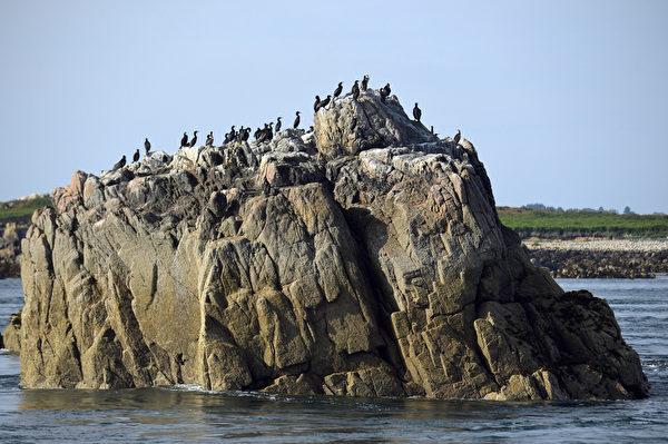 法國布列塔尼區布雷阿島(Brehat Island)東北方的巨石上聚集一群鸕鶿鳥 。(MIGUEL MEDINA/AFP)