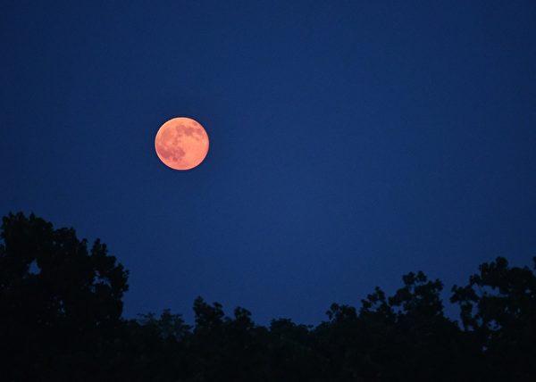 2014年8月10日,超级月亮高高悬挂在天空。(MANDEL NGAN/AFP/Getty Images)