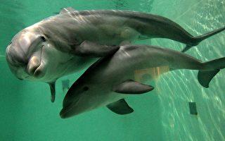 俄罗斯征召海豚间谍 恐袭击西方舰艇