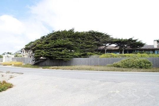 髮型樹(地圖上的景點11﹣12)(王文藝/大紀元)