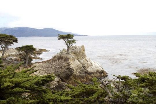 地標樹:孤獨求敗(地圖上的景點14﹣15)(王文藝/大紀元)