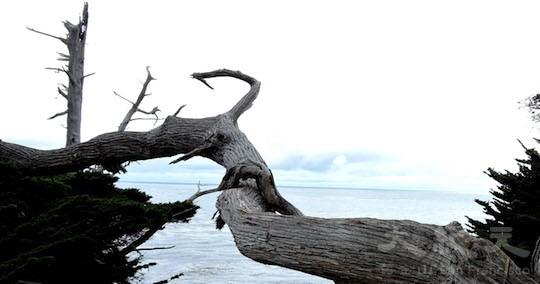 魔鬼樹( Ghost Tree)(地圖上的景點17﹣18)(王文藝/大紀元)