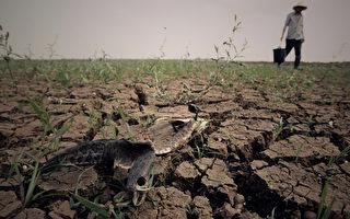 中國耕地嚴重退化逾4成 中共刻意隱瞞實情