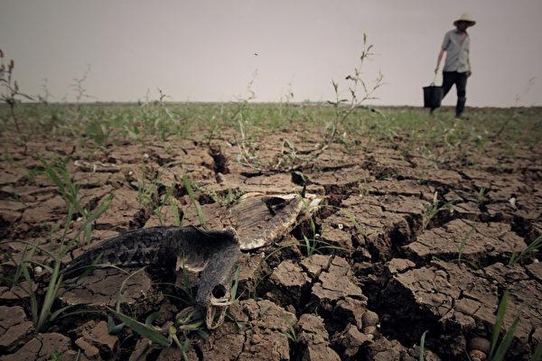 中国耕地严重退化逾4成 中共刻意隐瞒实情