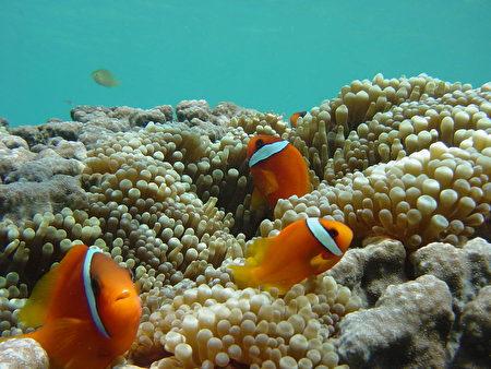 日本沖繩宮古島潛水