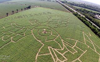 全台最大玉米迷宫开心试走 欢迎来挑战