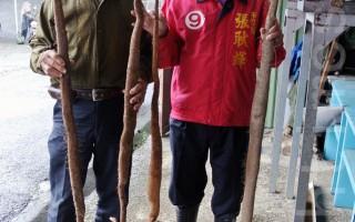 基隆山藥栽培技術升級  3位農民破歷年產量