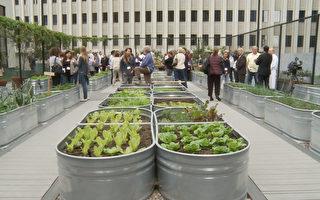 年省15萬食客增三成 都市農業潛力大