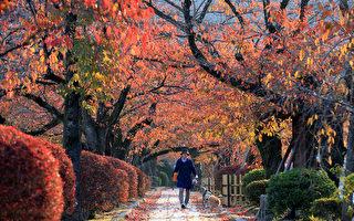 組圖:日本京都深秋楓紅美景