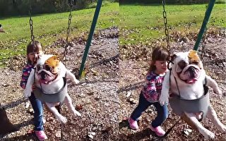【視頻】鬥牛犬盪兒童鞦韆超開心