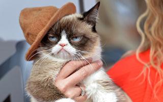 臭臉「不爽貓」爆紅 兩年賺近億美元