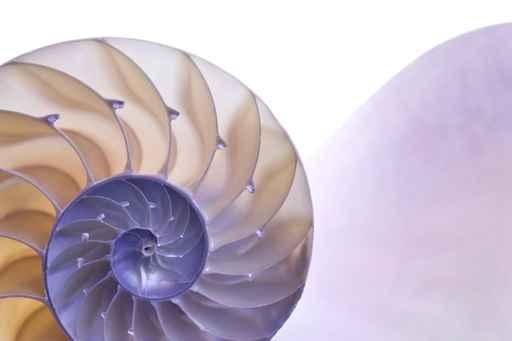 鸚鵡螺貝殼(fotolia)