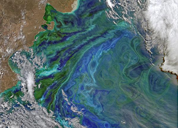 NASA的地球觀測衛星於11月2日拍攝到的阿根廷沿岸大西洋水域的浮游生物分佈。生命的存在讓地球更加多彩。(NASA/AFP)