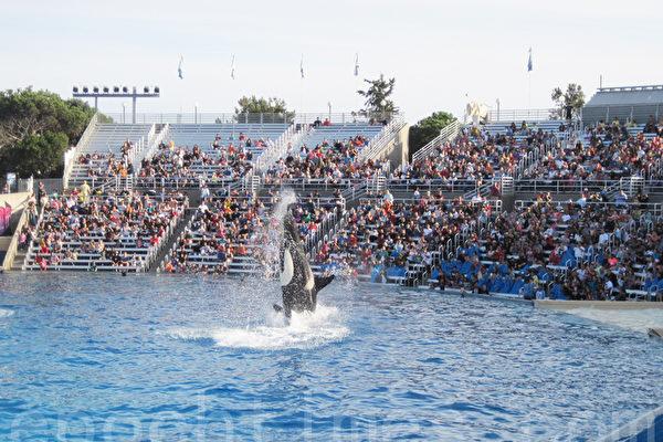 圣地亚哥海洋公园建新景点