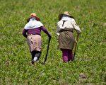 加州农业生产(MARTIN BERNETTI/AFP/Getty Images)