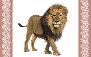 超神奇! 一筆就能畫出一隻兇猛的獅子?結果真是太厲害了!