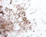「冬至進補 春天打虎」 看看各地都在吃什麼?