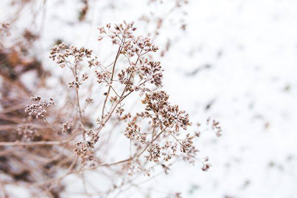 大氣是談吐大方得體,處世自然諧和,生活態度平和。圖為示意圖。(Pixabay)