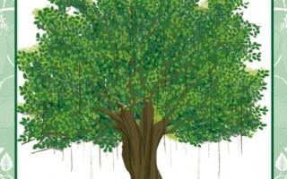 每个人都有一棵属于自己的树:榕树