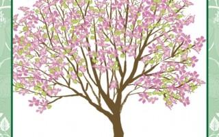 每个人都有一棵属于自己的树:羊蹄甲