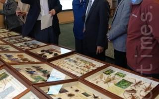 告别山中传奇   7百蝴蝶标本下山展示