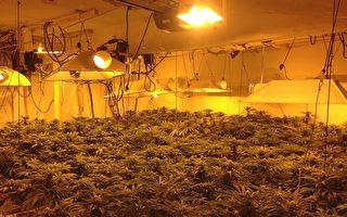 亞凱迪亞4華裔種大麻被捕