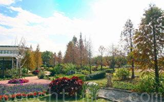 在华味香JTT欧式庭园里的落羽松林,在南部很难看到。(赖友容/大纪元)