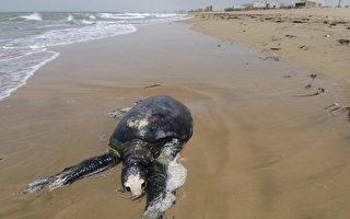 墨西哥沿岸150只海龟集体死亡 死因成谜