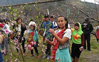 三光桃花季 傳遞桃枝開花之美