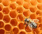 佛蒙特州伯靈頓校區(Burlington School District)設有深入的養蜂課程。(Richard Blaker/Fotolia)