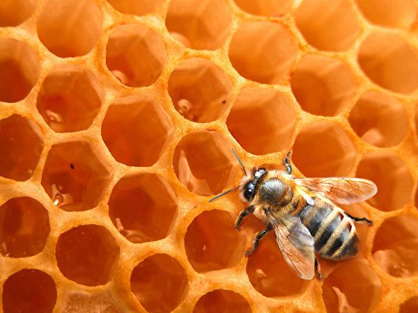 佛蒙特州伯灵顿校区(Burlington School District)设有深入的养蜂课程。(Richard Blaker/Fotolia)