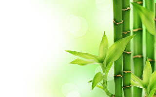 台湾古典诗:竹