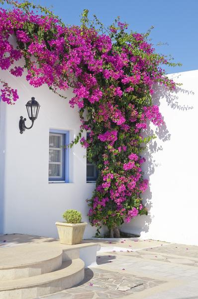 密克諾斯(Mykonos)是愛琴海上最負盛名的美麗島嶼之一,教堂廣場、白沙海岸、落日餘暉、旋轉風車以及像童話世界般的民宅街巷,構成了一幅幅世界級的畫作。(Fotolia)