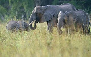 走私犀牛角和象牙到中國 美華裔教授被控