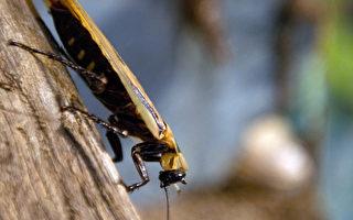 春夏驅蟲妙招:對付蟑螂有法寶
