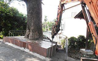 刨除水泥鋪面  挽救被活埋路樹