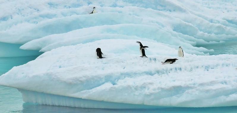 南极惊现八千个冰上湖泊 恐导致冰川崩塌