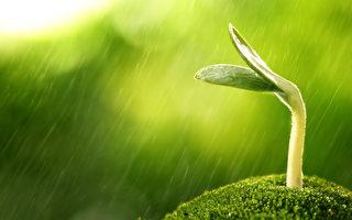 春夏之交雨生百穀 穀雨時節喝穀雨茶賞穀雨花