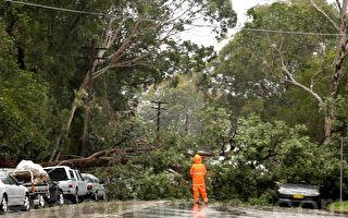 狂风暴雨袭击澳纽省 3人丧生21万户停电
